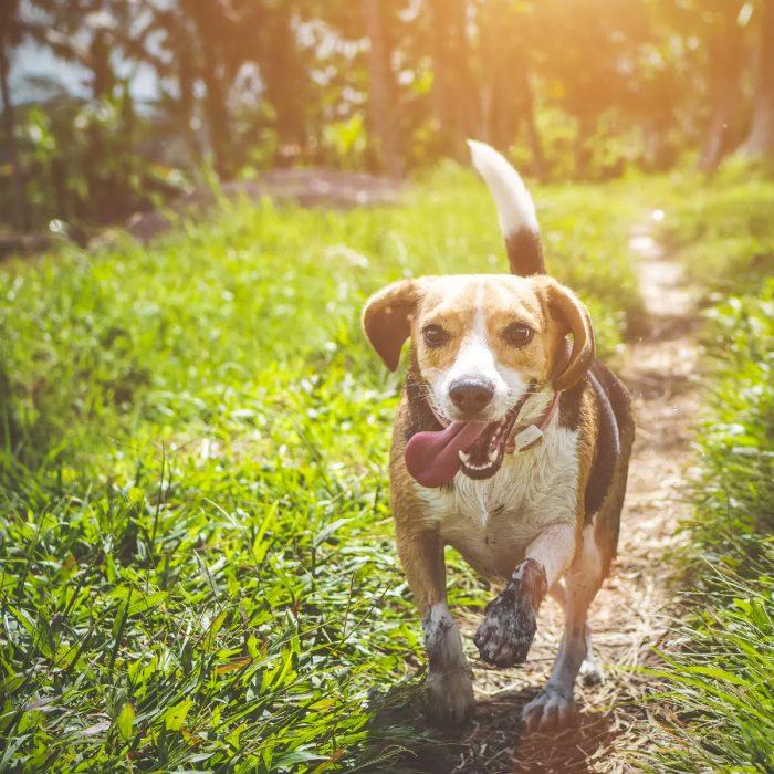 Best Friends Animal Society – Help Save Them All