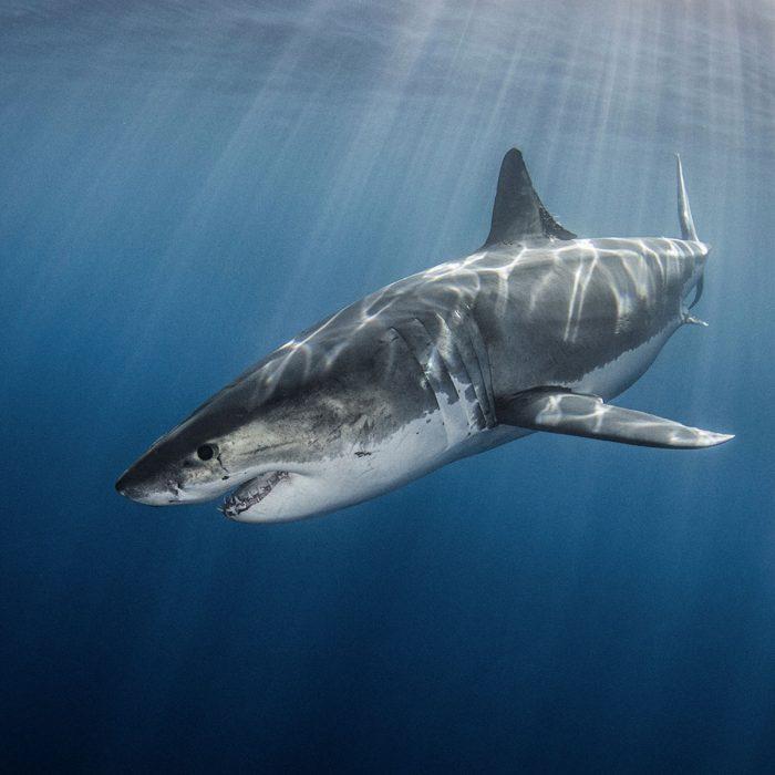 Oceana – Protecting the World's Oceans
