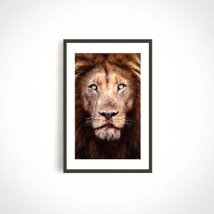 Prints for Wildlife