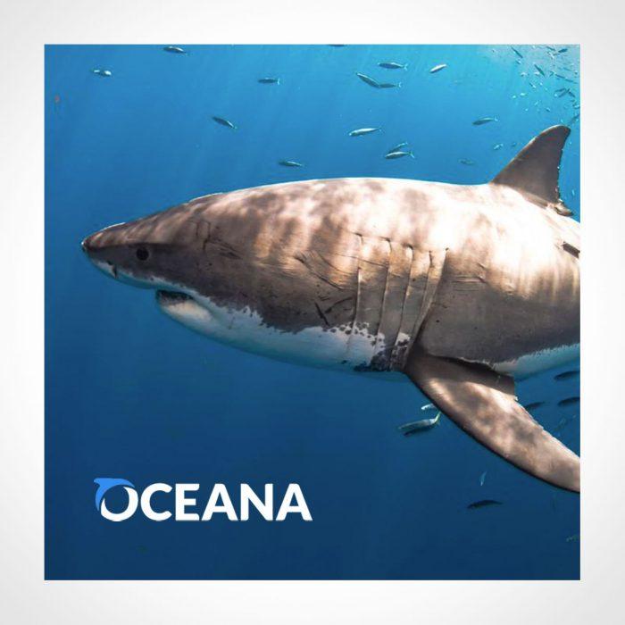 Oceana Adopt a Shark Kit